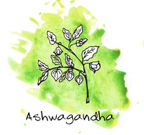 Ashwagandha Herb Drawing
