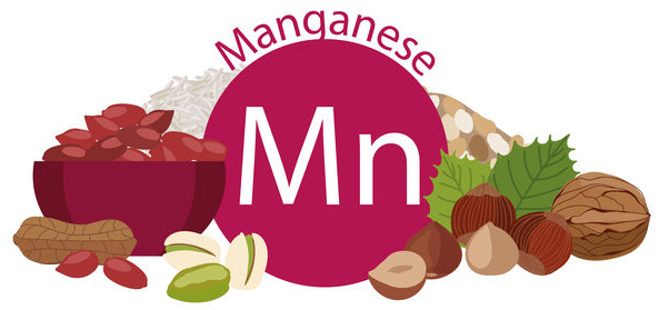 Manganese foods thyroid
